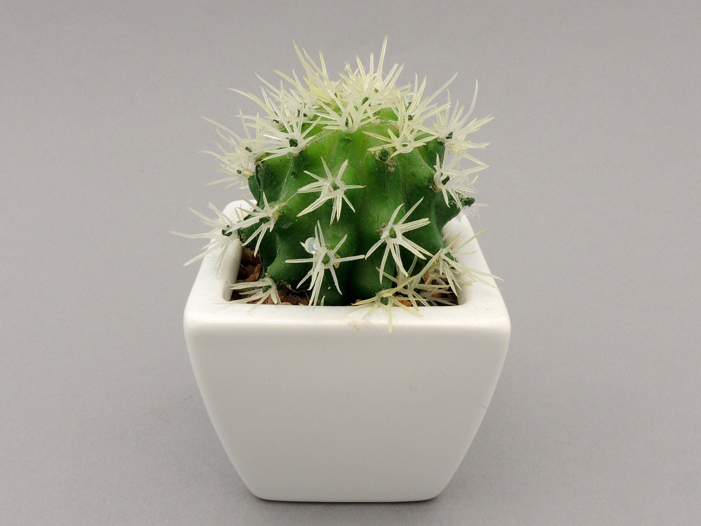 Kaip prižiūrėti kaktusus, kad jie papuoštų namus - mylimamokykla.lt