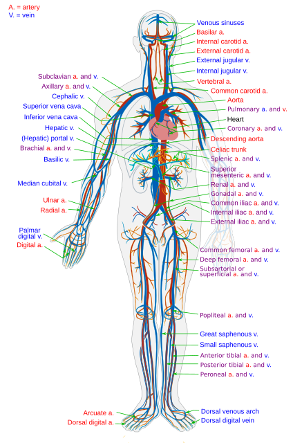 fx kraujo modifikuota prekybos sistema